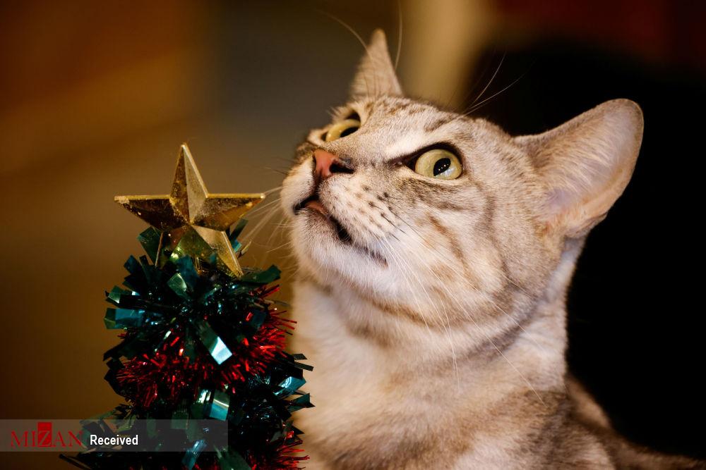 گربه درمانی - سئول