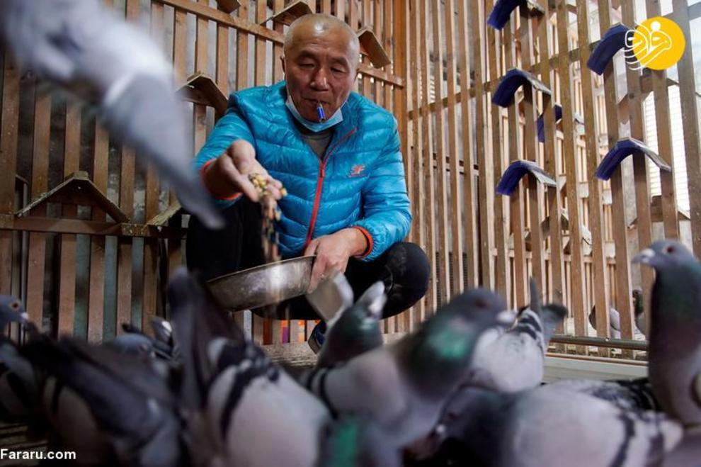 resized 819358 747 کبوتربازهای چین