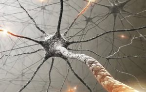 آسیب مغزی کووید ۱۹ در اثر حمله مستقیم ویروس نیست پزشکی و سلامت