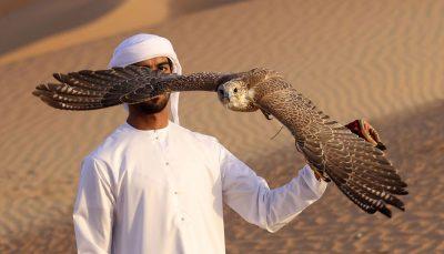 تمرینات عقابی محیط زیست, عقاب