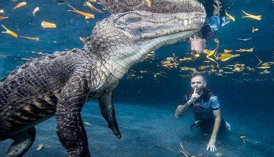 خیره کنندهترین عکسهای حیات وحش سال ۲۰۲۰
