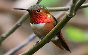 پرندهای که در یک دقیقه 62 بار رنگ عوض می کند بازتاب تی وی