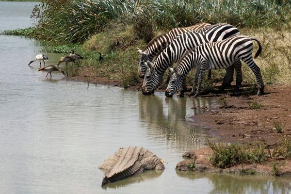 تصاویر برگزیده حیات وحش در هفته اخیر از دریچه لنز عکاسان آماتور