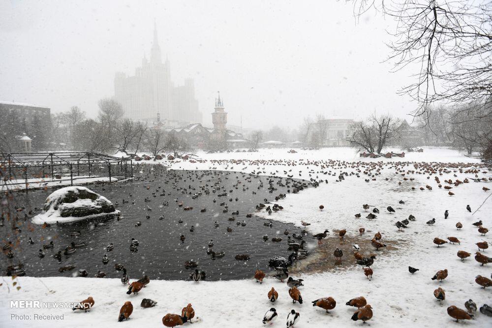 3653320 باغ وحش مسکو