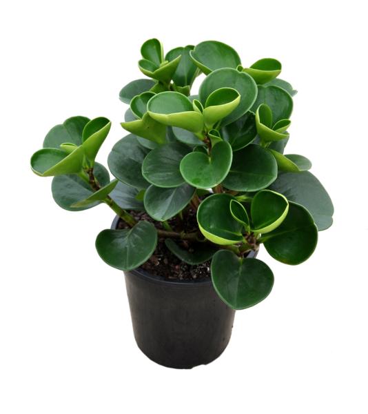 ۱۵ گیاه مناسب اتاق نوزاد و کودک