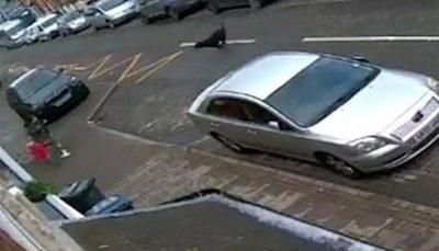 حمله دلخراش سگ ولگرد به مادر و ۲ کودک خردسال انگلیسی/ فیلم