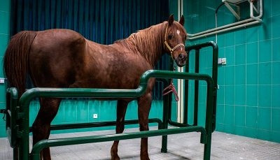 عمل جراحی آب مروارید چشم اسب،طوطی وسگ/ عکس