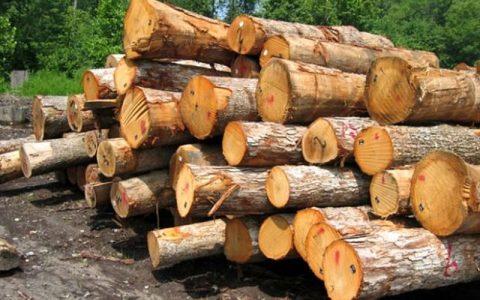 چوب با آمبولانس تایید شد قاچاق چوب با آمبولانس تایید شد