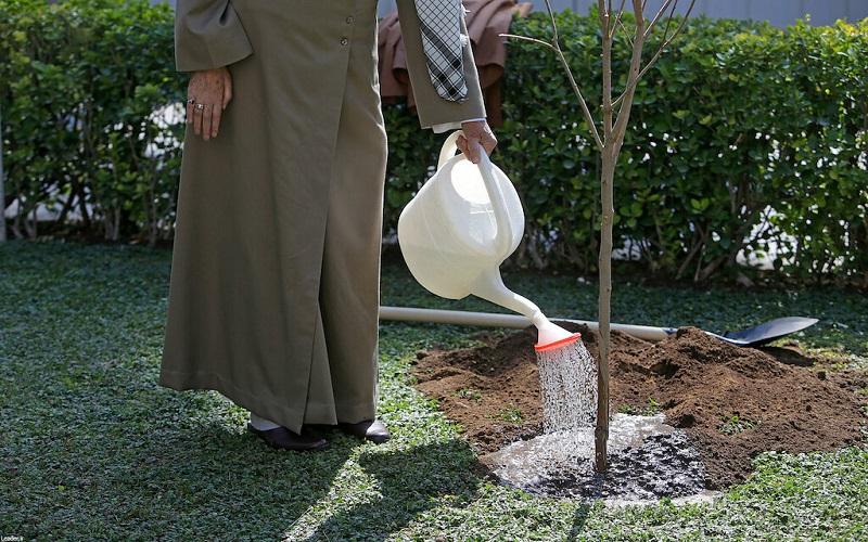 رهبر انقلاب در روز درختکاری دو نهال کاشتند