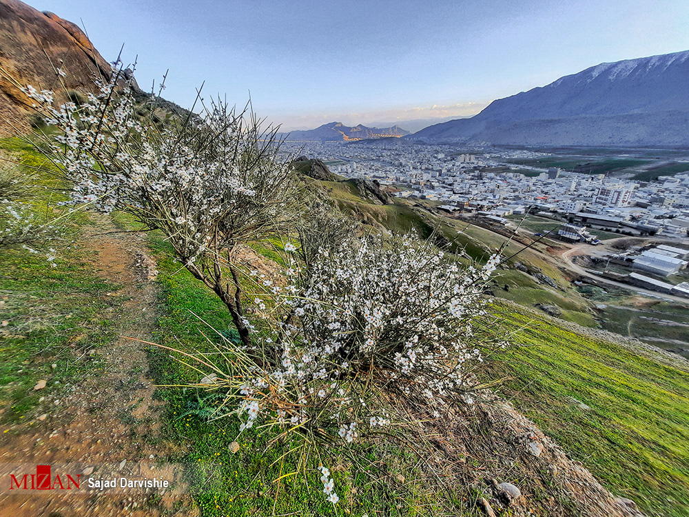 شکوفههای بهاری