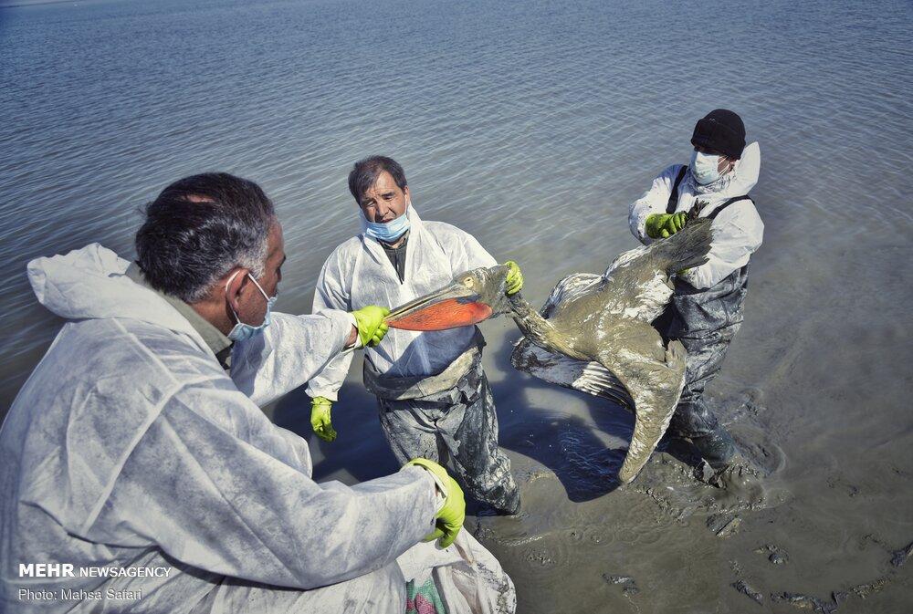پایان تلخ مهاجران خلیج