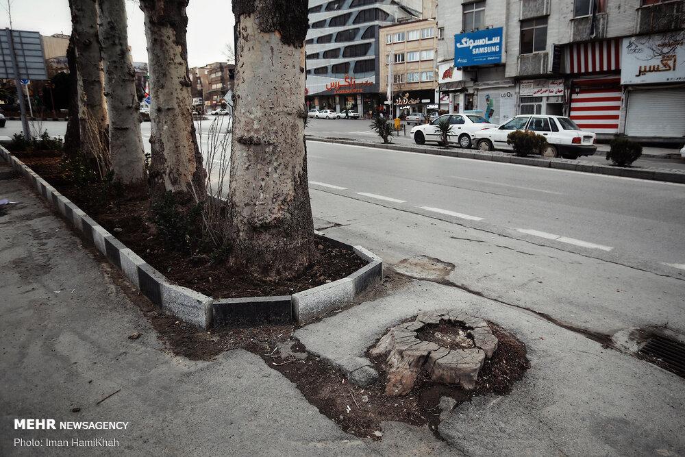 جای خالی درخت