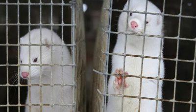 انتقال کرونا از انسان به حیوانات تایید شد