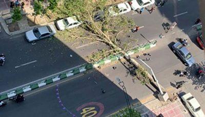 سقوط چنار ۶۰ ساله در خیابان ولیعصر در پی وزش بادِ خفیف