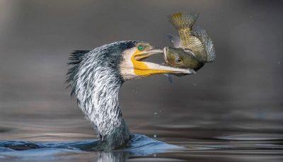 های مسابقه عکاسی از پرندگان سال ۲۰۲۱