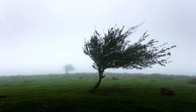 باد شدید در بیشتر استانها در روز شنبه