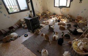 پناهگاه گربه های جنگ زده سوریه / عکس