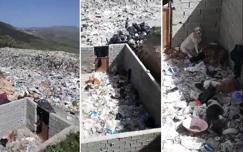 چشمانتظاران مرگ در دپوی زباله مرزنآباد/ فیلم