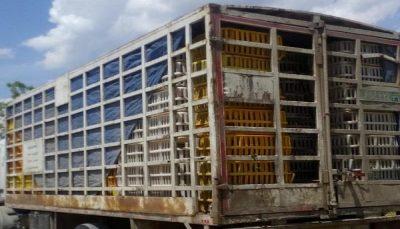 توقیف کامیون حامل 3000 مرغ زنده در شاهینشهر