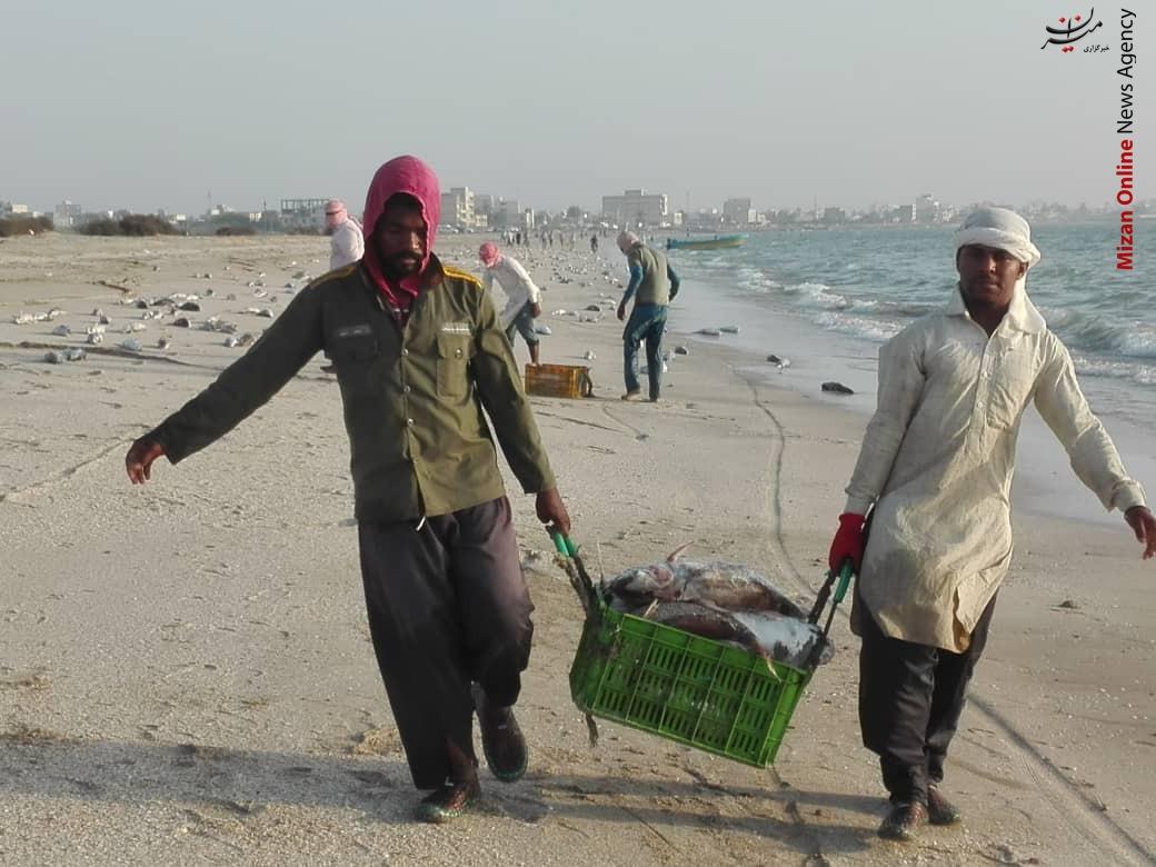 لاشه گربهماهیهای جاسک از قایق صیادان به ساحل رسید؟ / فیلم و عکس