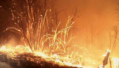 آتشسوزی دشتستان بوشهر