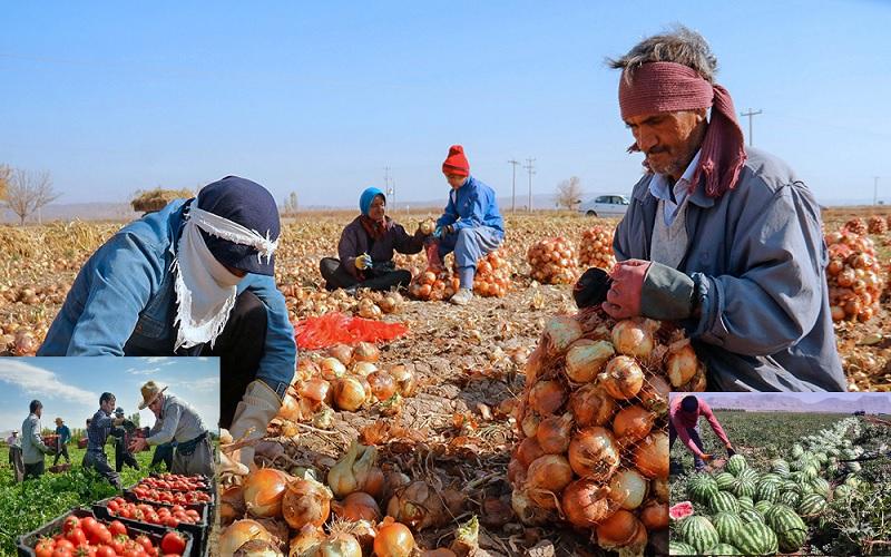 دسته گل جدید مسئولان در حوزه کشاورزی؛ فاسد شدن صدها هزار تن پیاز، گوجه فرنگی و هندوانه در جنوب کرمان