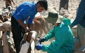 واکسیناسیون رایگان علیه بیماری تبمالت