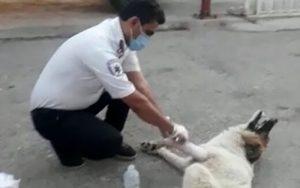 پناه بردن یک سگ مصدوم به اورژانس