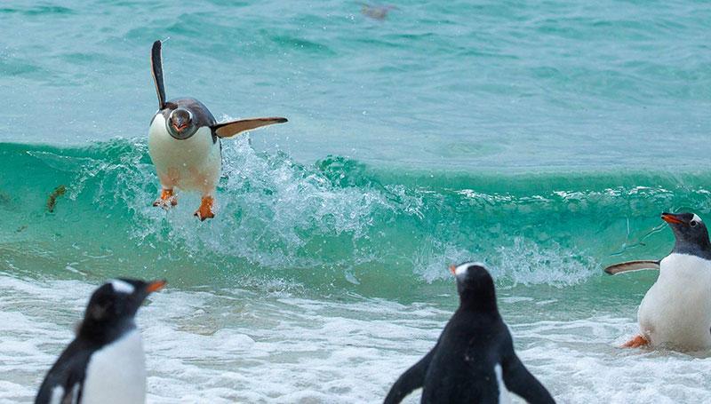 تصاویر خندهدار از مسابقه عکاسی کمدی حیات وحش ۲۰۲۱