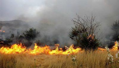 نماینده مردم سردشت خواستار مهار فوری آتش سوزی در جنگلهای آذربایجانغربی شد