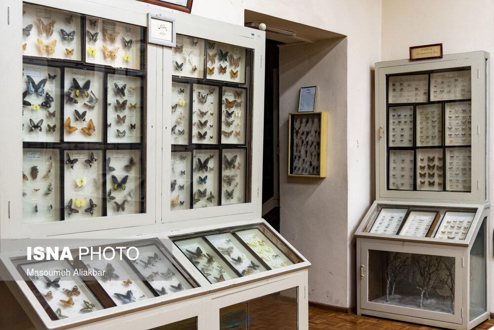 خاصترین موزه جانور شناسی ایران