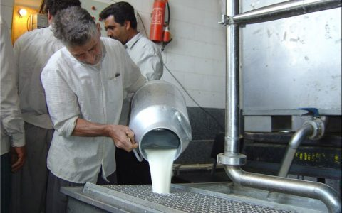 افزایش قیمت شیر منتفی شد