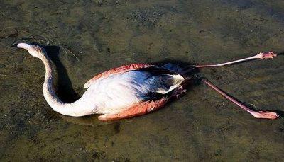 پیدا شدن لاشه هزاران پرنده در استرالیا