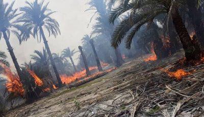 ۸۰۰ نخل مثمر اروندکنار در آتش سوخت