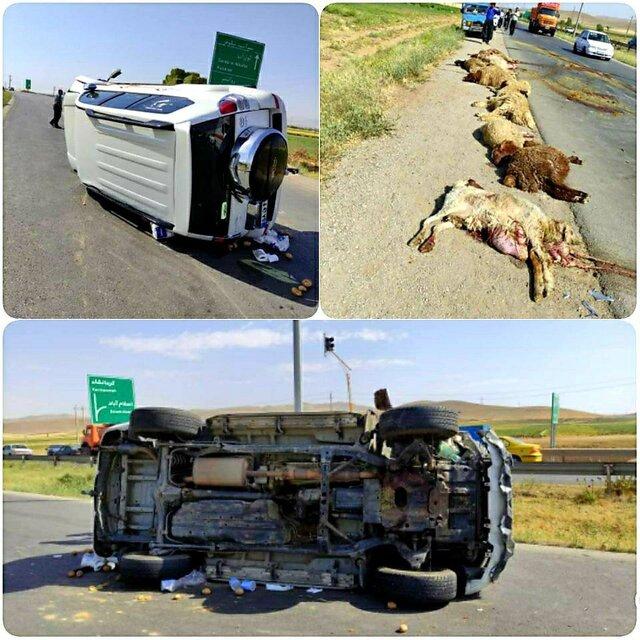 مرگ چوپان و تلف شدن 22 گوسفند در حادثه رانندگی