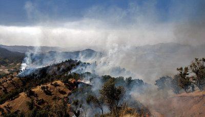 ۲۳۳ هکتار از جنگل های مریوان در آتش سوخت