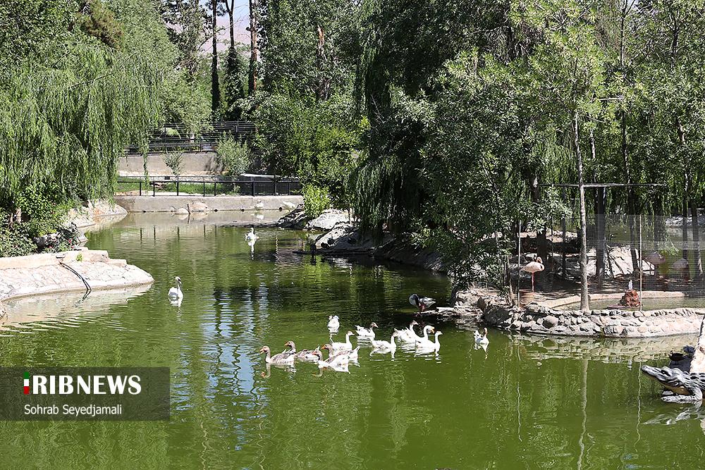متولدین فصل بهار باغ وحش تهران