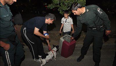 برخورد پلیس با سگگردانی در تهران