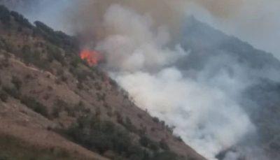 جنگلهای گالیکش گلستان دچار آتش سوزی شد