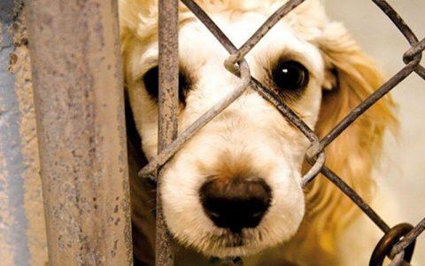 دستگیری فرد حیوان آزار در خمام پس از کشتن یک قلاده سگ