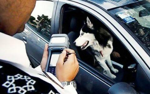 رئیس پلیس راهور ناجا گفت: گردانندگان حیوانات میتوانند آنها را داخل جعبه مخصوص خود قرار دهند و حمل کنند.