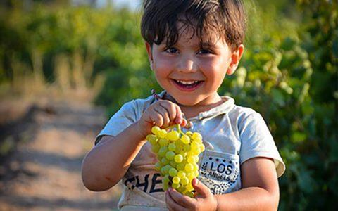 مضرات زیادهروی در مصرف انگور