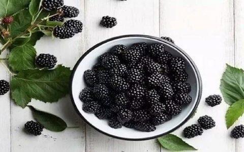 ۵ خوراکی سیاه رنگ که باید در رژیم غذایی خود بگنجانیم