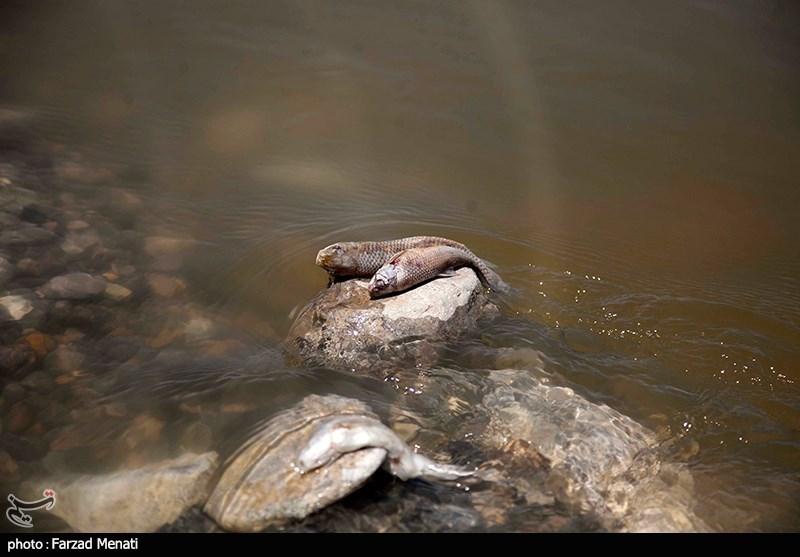 مرگ آبزیان رودخانه گاماسیاب - کرمانشاه