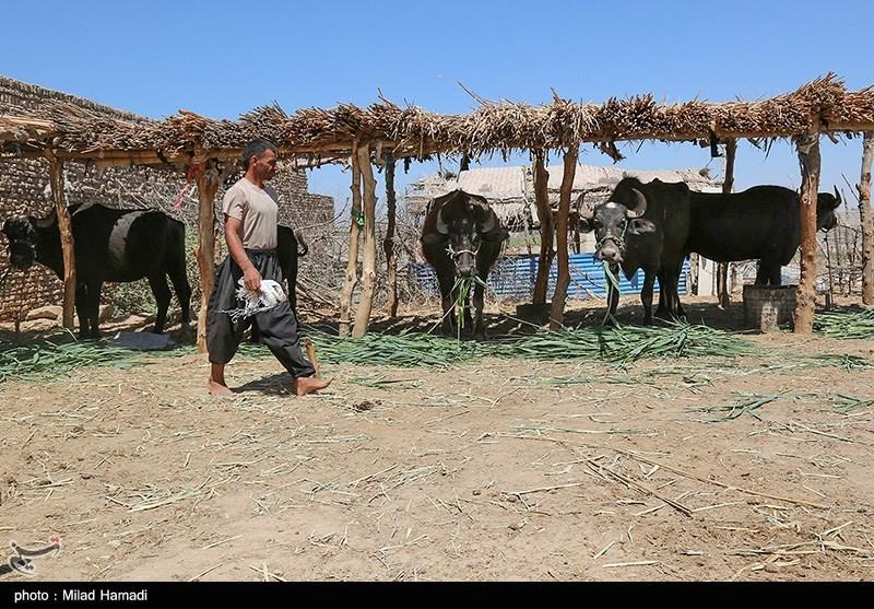 بازگشت آب به منطقه میسان - خوزستان
