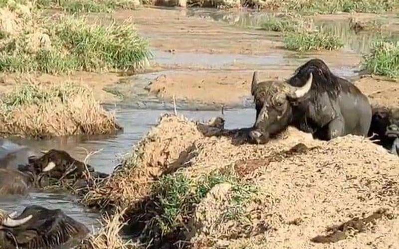 معیشت و جان مردم خوزستان در خطر است/ تالاب را نخشکانید