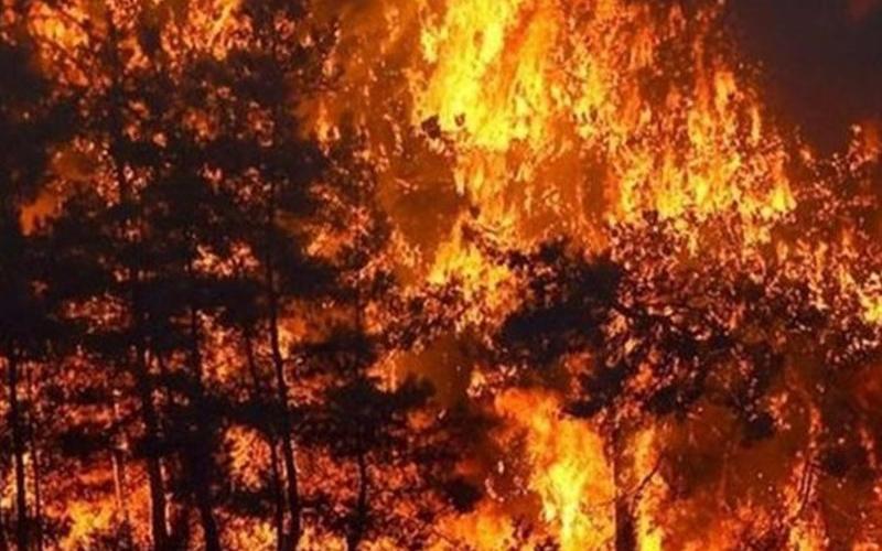 آتش سوزی یک شهر کوهستانی کالیفرنیا را به خاکستر تبدیل کرد