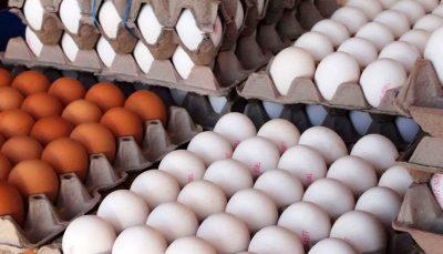 هر شانه تخم مرغ ۴۵ هزار تومان شد