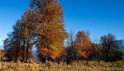 مدیریت بحران: پاییز امسال، گرمتر از حالت عادی است