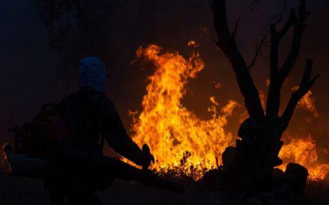 مرگ ۴ مرد روستایی در آتشسوزی جنگلهای فیروزآباد فارس